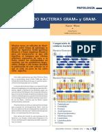 Patologia Bacterias Gram Positivas Gram Negativas Mora SA201202