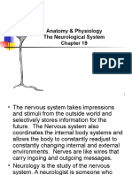 Anatomy and Physiology Chapter 19 Neurological System