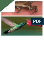 animales vertebrados pequeños.docx