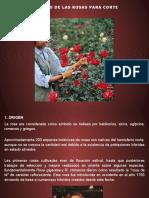 2. Rosas.pptx