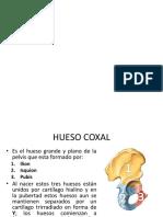 Hueso Coxal y Fémur