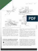 Anatomia clinica Membrul inferior.pdf