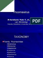 Picornavirus x