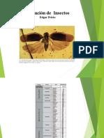 Evolucion Insectos EP