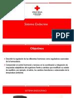 3. Sistema Endocrino