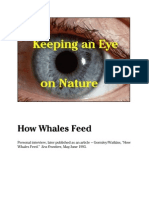 Vignettes How Whales Feed