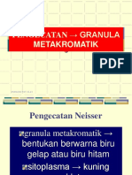 p-gm.ppt