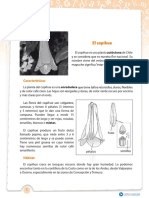 art. informativo.pdf
