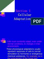 1.3CellularAdaptations.ppt
