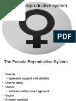 Repro Female