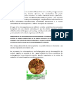 microbiologia bacteriana