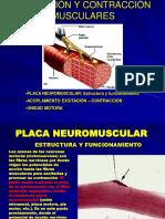 Fisiol Placa Nm (1)