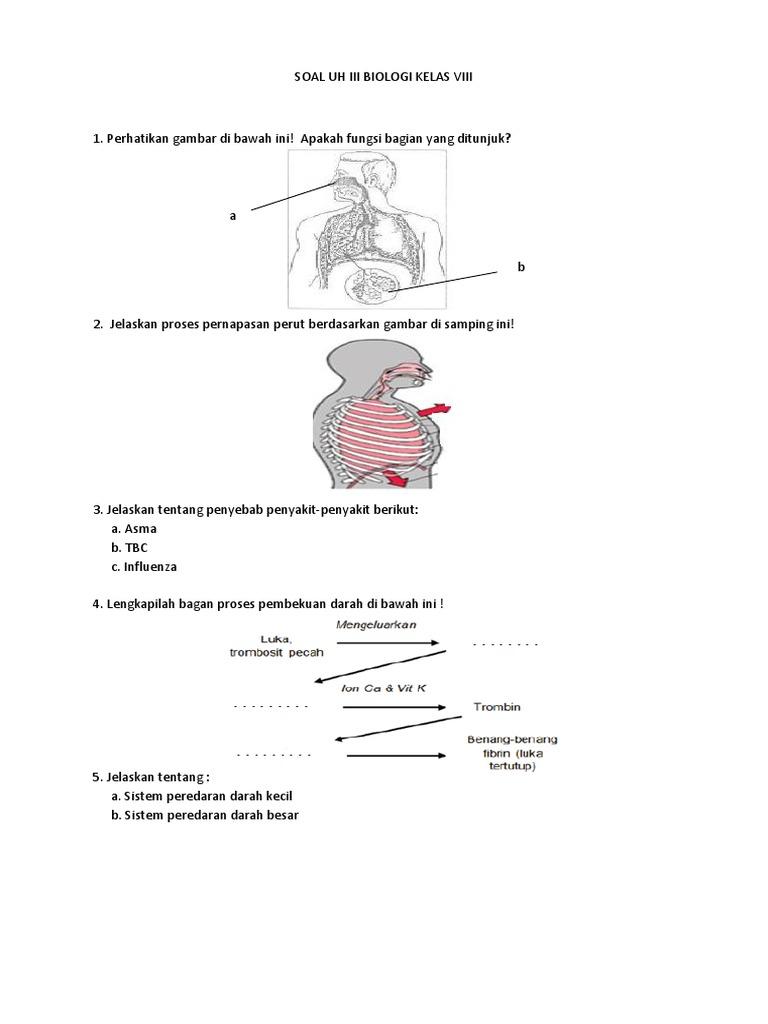 Soal uh iii biologi kelas viii 1536053670v1 ccuart Images