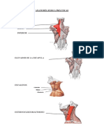 Anatomia Basica Quiromasaje