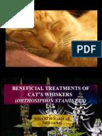 Cat's whisker presentation