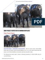 Dairy Project Report With 50 Murrah Buffaloes _ Agrifarming