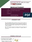 TROMBOELASTOGRAFIAS.pptx