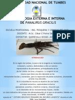 Morfologia Externa e Interna de Panalirus Gracilis Querevalu Dioses Jose Luis 2017