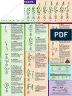 Corn Growth and Development Poster