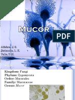 02 - Mucor Spp.