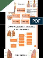 Pulmones y arbol traqueobronquial ppt
