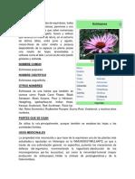 ECHINACEA MEDICINA BIOLOGIA.docx