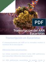 Presentación Transcripción ARN Eucariotas