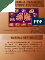 Desarrollo del sistema nervioso central
