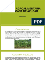 Cadena Agroalimentaria de La Caña de Azúcar