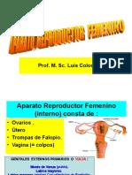 3.- Reproductor Femenino