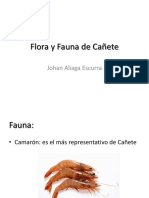 Flora y Fauna de Cañete 2