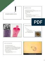 Hymenolepis Nana.pdf