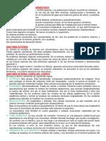 Características Phylum Nematodos