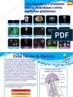 26.Jellyfish Guide 2014 - Spain (spanish).pdf