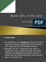 Kulit Stem Cells