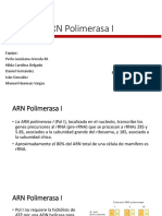 ARN Polimerasa I