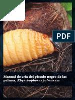 Manual de Cría Del Picudo Negro de Las Palmas Rhynchophorus Palmarum