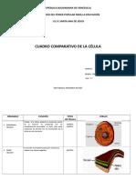 cuadrocomparativoorganelosyfunciones-110709114528-phpapp01.doc