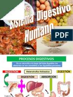 Sistema Digestivo Humano Mejorado