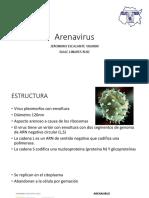 Arena Virus