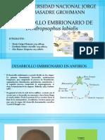 DESARROLLO-EMBRIONARIO-DE-ANFIBIOS.pptx