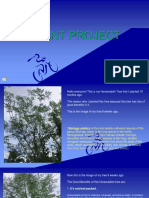 Plant Project by Wineff Gulane