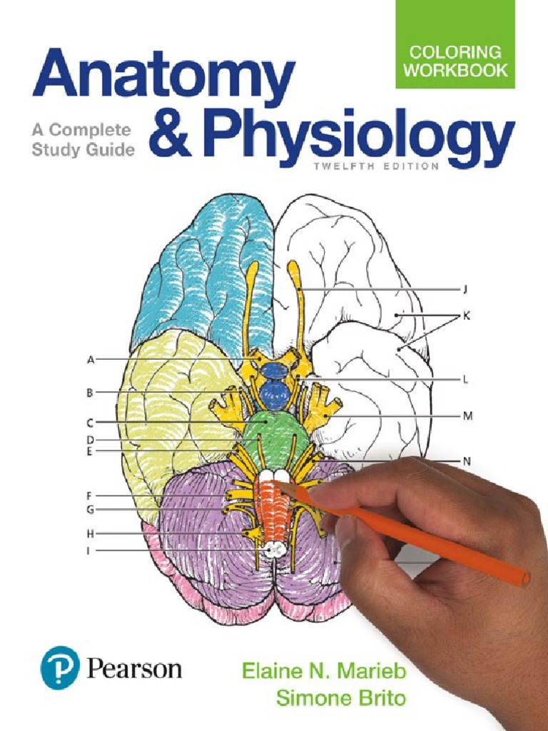 Ungewöhnlich Anatomy And Physiology Coloring Workbook Chapter 12 ...
