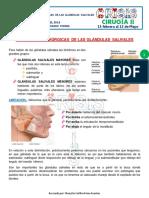 19.-AFECCIONES-QUIRURGICAS-DE-LAS-GLANDULAS-SALIVALES.-1G