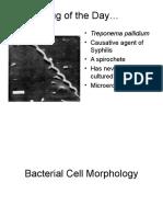 02+Microbiology+Morphology-3.ppt