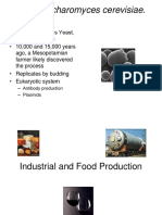 26+Industrial+and+Food+Production.ppt