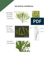 Sistemática de Plantas (Resumen Con Imágenes)
