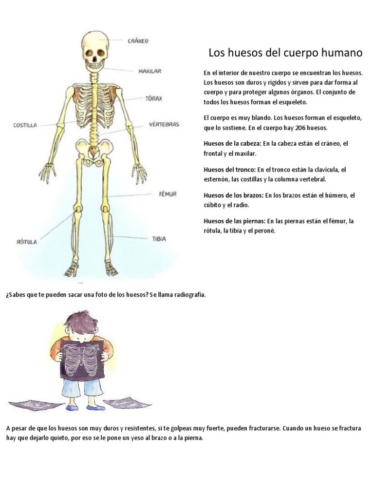 Magnífico Los Huesos Del Esqueleto Ilustración - Imágenes de ...
