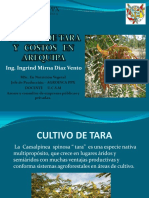 ...Arequipa-cultivo de Tara y Costos Agroinca Ppx