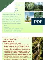 30470871 Persebaran Flora and Fauna Di Indonesia (1)